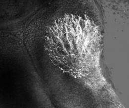 Cosmetic chemical hinders brain development in tadpoles