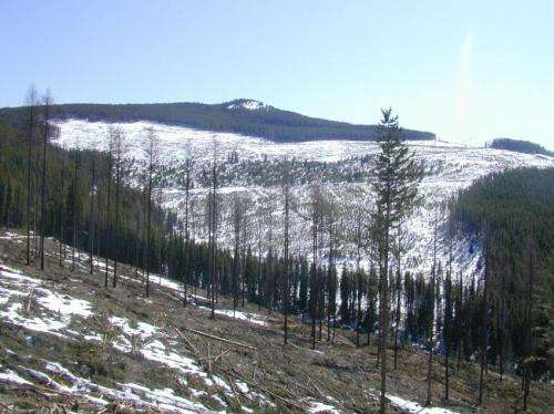 Deforestation in snowy regions causes more floods