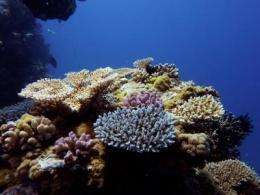 Under climate change, winners and losers on the coral reef