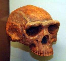 Did climate change shape human evolution?