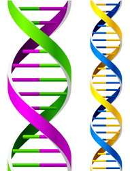 DNA type polymer for nanoelectronics