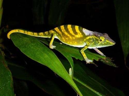 Experts release list of 100 threatened species