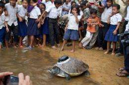 Extremely rare turtle released into the wild