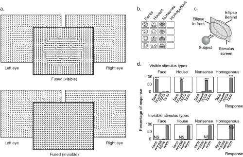 Face the facts: Neural integration transforms unconscious face detection into conscious face perception