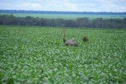Farm soil determines environmental fate of phosphorous