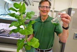 Fill 'Er up with tobacco? Berkeley lab-led team explores new path to biofuels