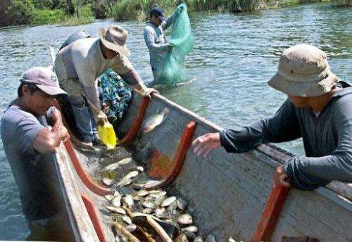 Fishermen at Lago Izabal, 280 km east of Guatamala count the fish they have trapped in one day's work in 2002