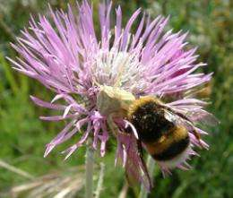 Flight of the bumblebee decoded by mathematicians