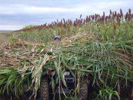 Forage silage alternatives sought in wake of drought
