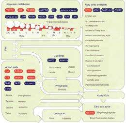 Genetic regulation of metabolomic biomarkers -- paths to cardiovascular diseases and type 2 diabetes