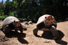 German palaeontologists have dug up the remains of nine turtle pairs that died while mating