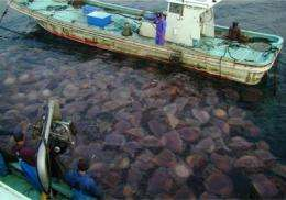 Global experts question claims about jellyfish populations