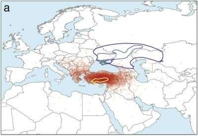 Indo-European languages originate in Anatolia