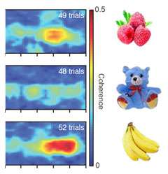 In-sync brain waves hold memory of objects just seen