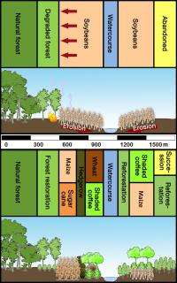 Intensive farming with a climate-friendly touch: Farming/woodland mix increases yields