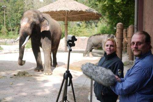 An elephant that speaks Korean