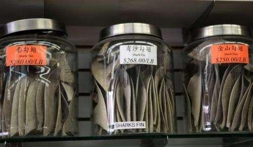 Jars filled with shark fins