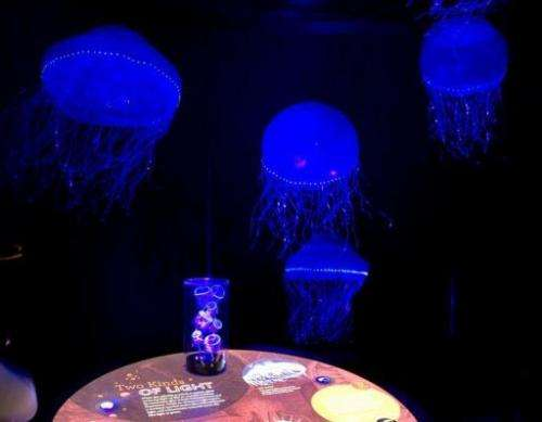 """Jellyfish are on display as part of the """"Creatures of Light: Nature's Bioluminescence"""" exhibit"""