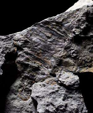 Fossil finds help fill in Romer's Gap