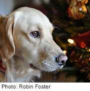 Keep your dog safe during hectic holiday season: expert