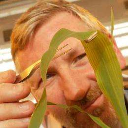 Lancaster researchers discover potential new weapon against African crop pests