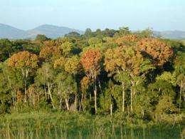 Landsat sets the standard for maps of world's forests