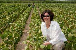Legume lessons: Reducing fertilizer use through beneficial microbe reactions