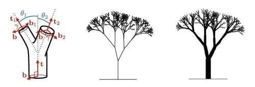 Leonardo da Vinci's tree rule may be explained by wind