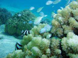 Less is more for reef-building corals