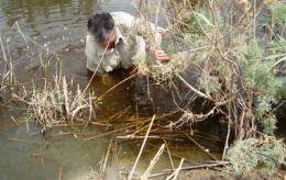 Lessons from Iraq: Urban marshes and city survival