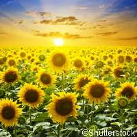 Let The Sun Shine And The Plants Will Follow