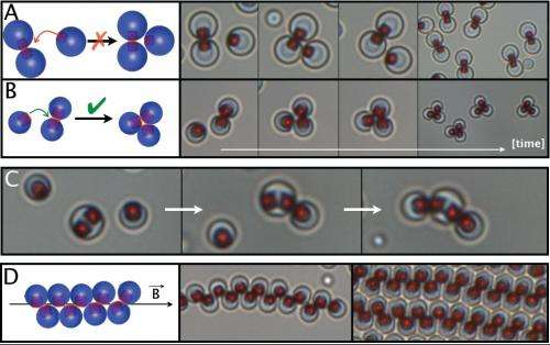 Particles magnetically 'click' to form superstructures