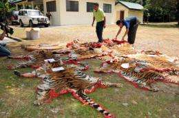 Malaysian Department of Wildlife and National Parks officers display confiscated tiger skins to the media in Kedah state
