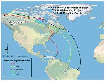Scientists examine fall migratory pathways and habits of whimbrels
