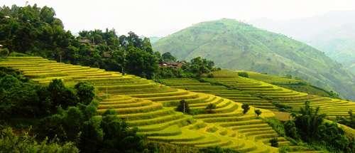 More Greenhouse Gas per Grain of Rice