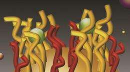 Nano-velcro clasps heavy metal molecules in its grips