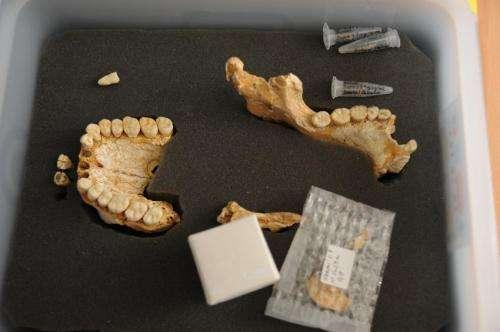 Neanderthals had knowledge of plants' healing qualities: study