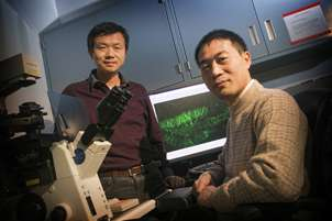 Newborn neurons--even in the adult aging brain--are critical for memory