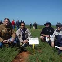 New chickpeas set to revive Australian pulse industry