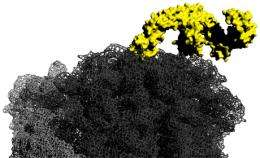 New insights to the function of molecular chaperones