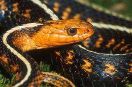New paper examines poison resistance in snakes around the world