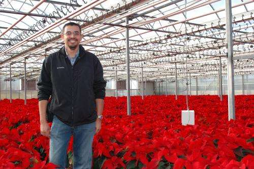 Poinsettias cultivars can take cooler temperatures, save growers
