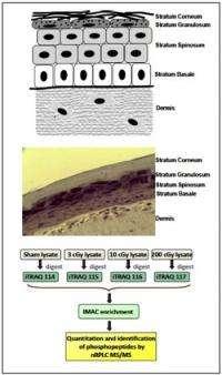 Proteomics identifies targets of ionizing radiation in a human skin model