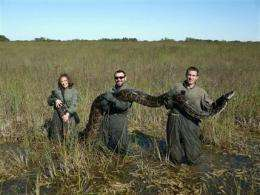 Pythons apparently wiping out Everglades mammals (AP)