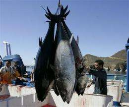 Radioactive bluefin tuna crossed the Pacific to US (AP)