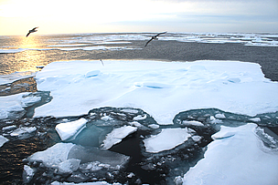 Record Arctic ice low drives urgent global action