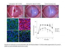 Regenerated cells may restore vision after corneal dysfunction
