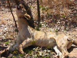 Report: Illegal hunting and trade of wildlife in savanna Africa may cause conservation crisis