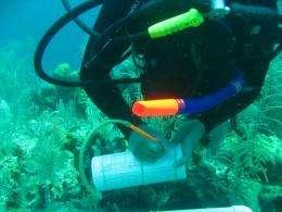 Rising ocean temperatures harm protected coral reefs