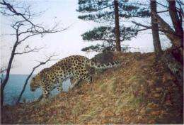 Russia declares 'Land of the Leopard' National Park